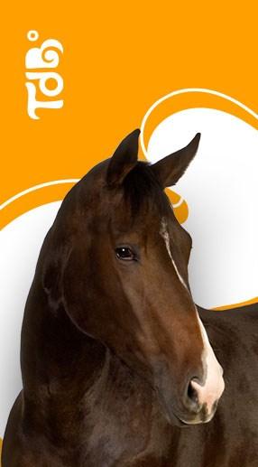 Cavalo Tudo de Bicho