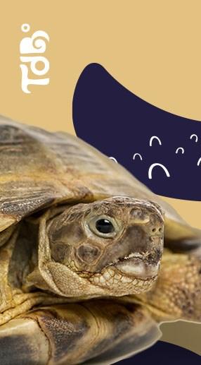 Tartaruga Tudo de Bicho