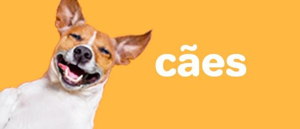 Banner Pet Dog