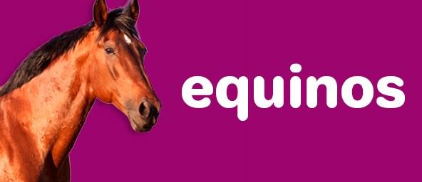 Banner Equinos