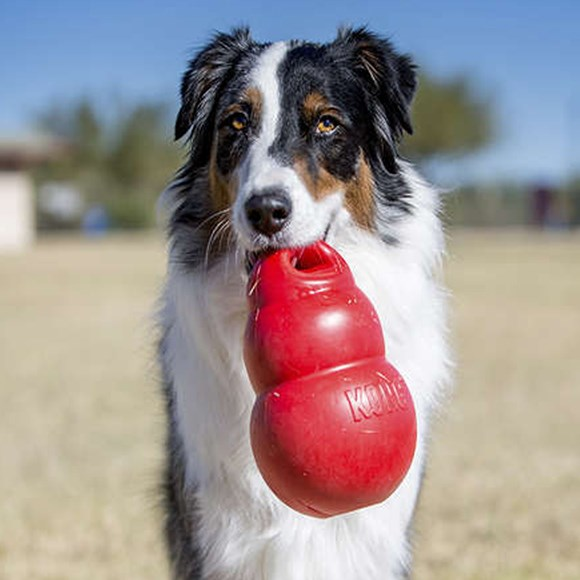Brinquedo Interativo Cães Kong Bouzer X-Large