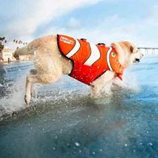 Colete Salva Vidas Nemo Segurança Para Cães Tamanho M