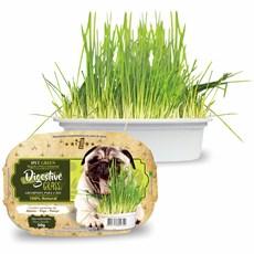 Graminha Para Cães Green Digestive Grass Ipet - 50G