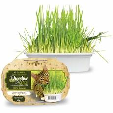 Graminha Para Gatos Green Digestive Grass Ipet - 50g