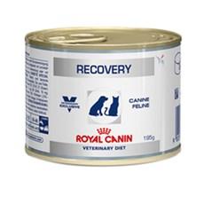 Ração Royal Canin Cães Recovery Lata - 195g