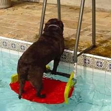 Save Dog Plataforma Anti-afogamento De Cães Para Piscina